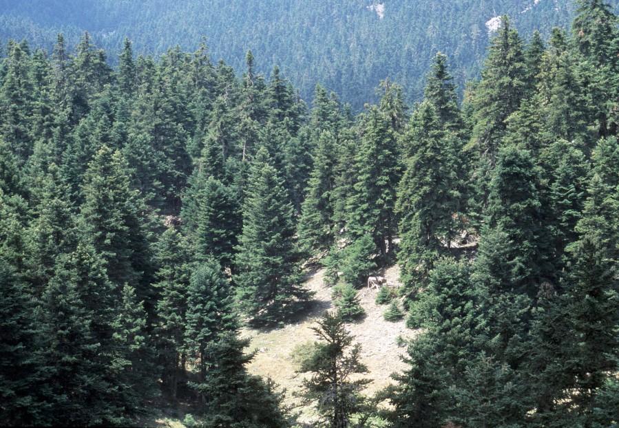 Στην κορυφή Γερολέκας υψ.1714μ. ΔυτικούΠαρνασσού